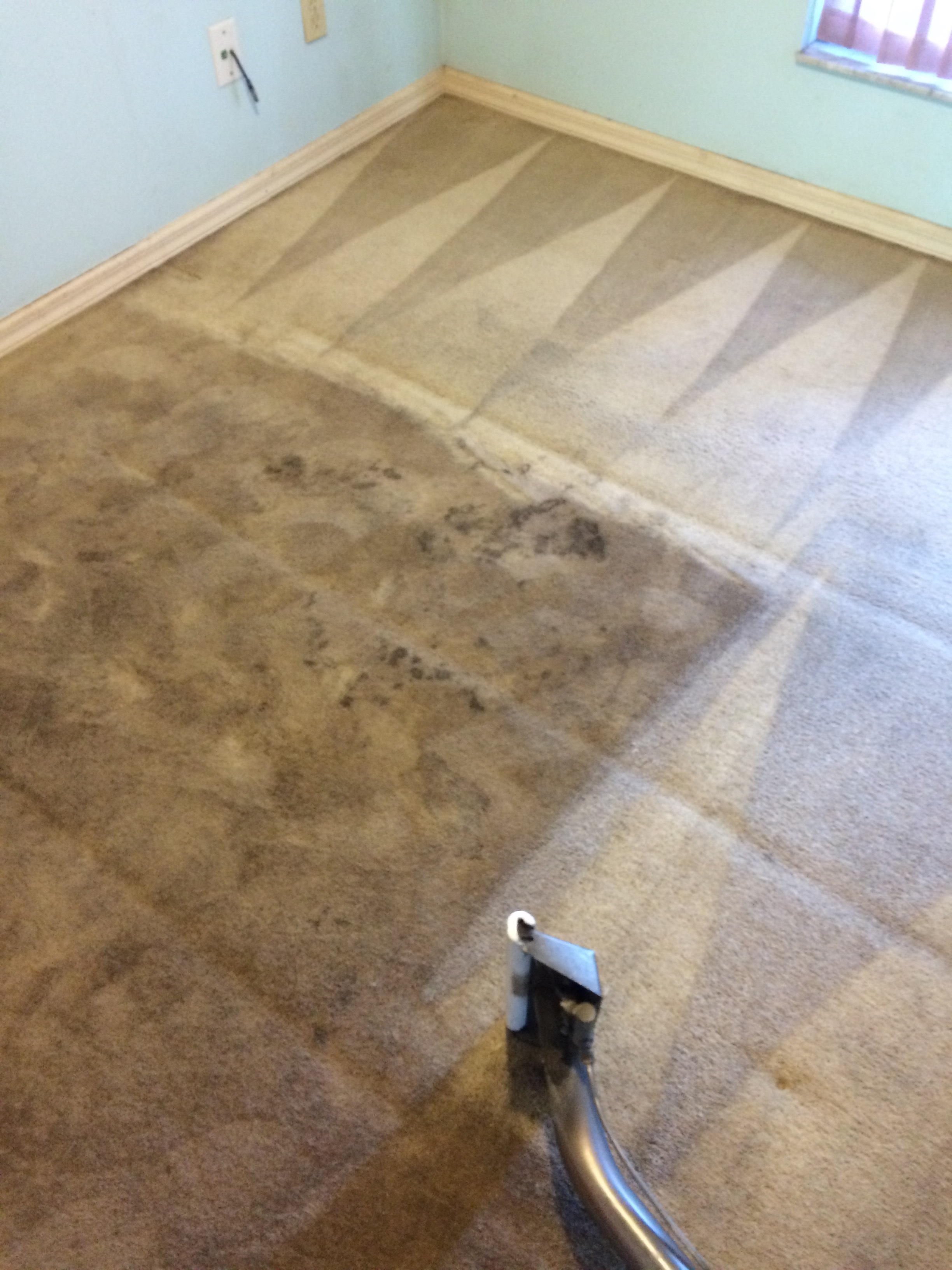 a plus carpet cleaning serving minneola clermont groveland